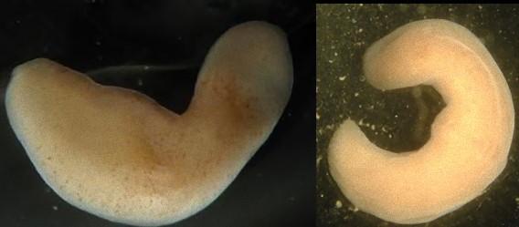 ちんうずむしって何?珍渦虫の生態・画像!茂木健一郎先生のアハ体験