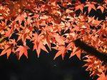 紅葉2017!和歌山の紅葉の見頃時期や名所のライトアップは?