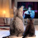 火村英生の推理2のドラマ動画!1話から最終話までをフル視聴する方法!