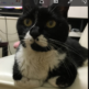3か月の長期不在より帰宅後ペットの猫はどんな反応をしたのか?